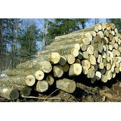 白腊木哪里便宜-白腊木-冠隆木业图片