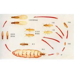 白蚁防治药,张家港白蚁防治,苏州安新图片