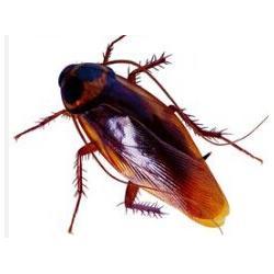 食堂灭蟑螂|常熟灭蟑螂|苏州安新图片