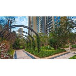 铁艺廊架景观厂家,威海铁艺廊架景观,靓景铁艺图片