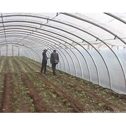 邢台大棚造价|一亩地蔬菜大棚造价|【温室大棚】(多图)图片