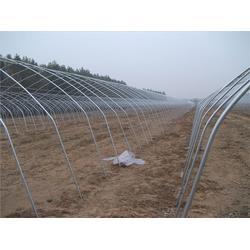 孝义大棚镀锌钢管厂家AAA订做大棚、大棚钢管(图)图片