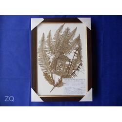 禾力教学设备,植物保色浸制标本,植物学标本图片