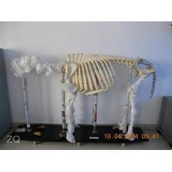 郑州动物标本,禾力教学设备,动物标本厂图片