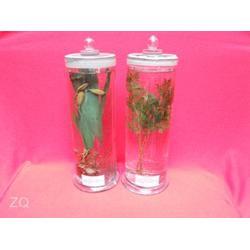 禾力教学设备 植物干制标本-赣州植物标本图片