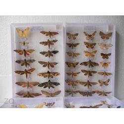 昆虫标本报价-禾力教学设备-聊城昆虫标本图片