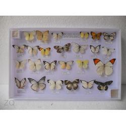 水晶昆虫标本,郑州昆虫标本,禾力教学设备图片