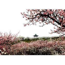 安康乡村旅游规划设计-户县安康乡村旅游-陕西观源景观设计图片