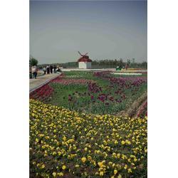 韩城乡村旅游亲子体验_兴平乡村旅游亲子体验_陕西观源景观设计图片