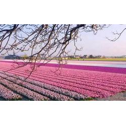 农业观光科技示范、农业观光、陕西观源景观设计方案图片