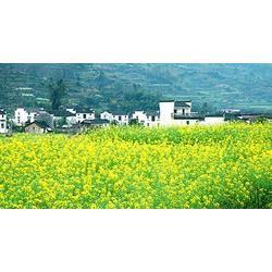 咸阳旅游策划规划团队-咸阳旅游策划-陕西观源景观设计图片