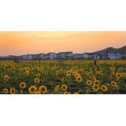 陕西观源景观设计、西安美丽乡村景观设计、西安美丽乡村图片