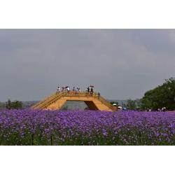 西安花海景观_陕西观源景观设计_西安花海景观四季策划图片