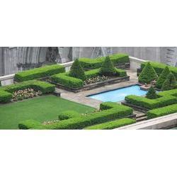 商业屋顶花园垂直绿化,镇坪商业屋顶花园,陕西观源景观设计图片
