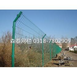 新疆双边丝护栏网|森泰丝网厂|双边丝护栏网图片