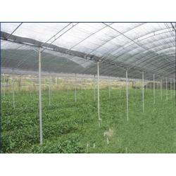 油茶树苗什么时候种植、油茶树苗、油茶树苗图片