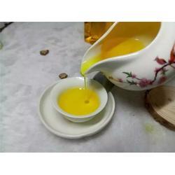 抚州油茶树苗_油茶苗圃基地(在线咨询)_油茶树苗图片