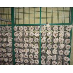 厂家直销蘑菇网片,森业丝网,蘑菇网片图片