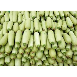 西葫芦供应-西葫芦-田润蔬菜图片