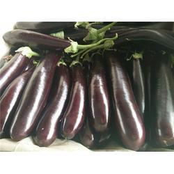 供应无公害蔬菜-无公害蔬菜-田润无公害蔬菜图片
