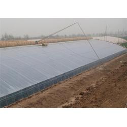 现代化温室大棚哪家好|现代化温室大棚|田润蔬菜图片