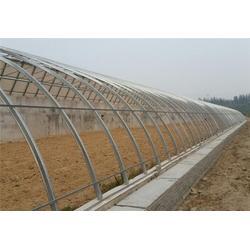 温室蔬菜大棚|阳光温室蔬菜大棚|田润蔬菜(优质商家)图片