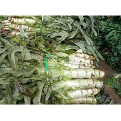 品牌莴苣供销社|田润蔬菜(在线咨询)|莴苣供销社图片