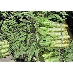 绿色蔬菜基地_蔬菜基地_田润蔬菜(查看)图片