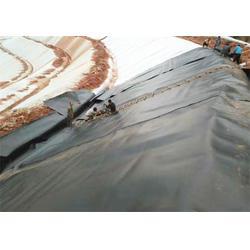 土工膜|金驰华易|浅水藕池专用土工膜图片