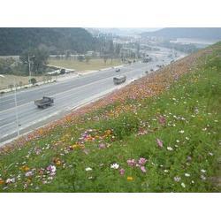 芜湖植被毯边坡绿化-环保植被毯品牌-植被毯图片