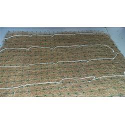 植生毯,椰纤维毯护坡绿化施工,石嘴山植生毯山体绿化图片