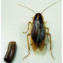 奥洁利美杀虫公司、灭蟑螂生产厂、房山区灭蟑螂图片