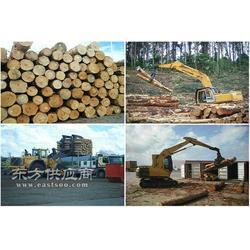 铁杉,铁杉木方图片