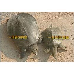 沈根荣久负盛名(图)_养殖土鳖_缙云县养殖土鳖图片