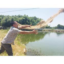 提供野生鳖,沈根荣的市场,武义县野生鳖图片