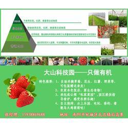大山生态园(图)|方城草莓供应|方城草莓图片