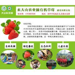 大山生态园草莓真好吃(图)|南阳草莓园采购|南阳草莓园图片