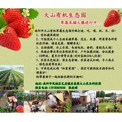 大山生态园有纯天然草莓(图)、南阳摘草莓优惠、南阳摘草莓图片