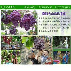 大山生态园欢迎你(图)|南阳摘葡萄|葡萄图片