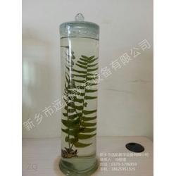 植物标本生产厂家 远航教学(在线咨询) 植物标本图片