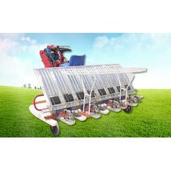 小八行插秧机尺寸、小八行插秧机、隆辉农业(查看)图片