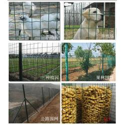 圈地绿色铁丝网,超兴金属丝网,亳州绿色铁丝网图片