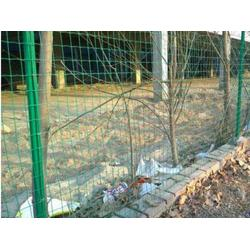 圈山养殖铁丝围栏网-铁丝围栏网厂家-酒泉铁丝围栏网图片